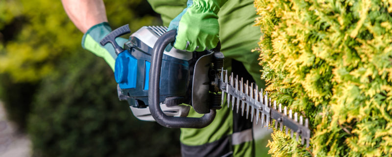 Shaping Garden Trees with Powerful Gasoline Hedge Trimmer Equipment. Gardener with Power Tool.